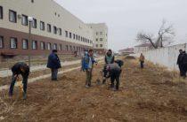 «Джипперы» Тараза озеленяют город к Наурызу