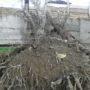 Благодаря санитарной обрезке деревьев удалось избежать ошибок прошлого