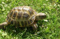 В Таразском парке жестоко расправились с черепахой