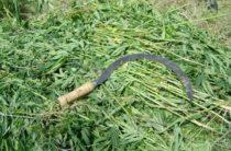 Более 800 кг наркотиков хранил судимый за убийство жамбылский сельчанин