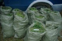 140 кг наркотиков хранили в своих домах жители сел Жамбылской области