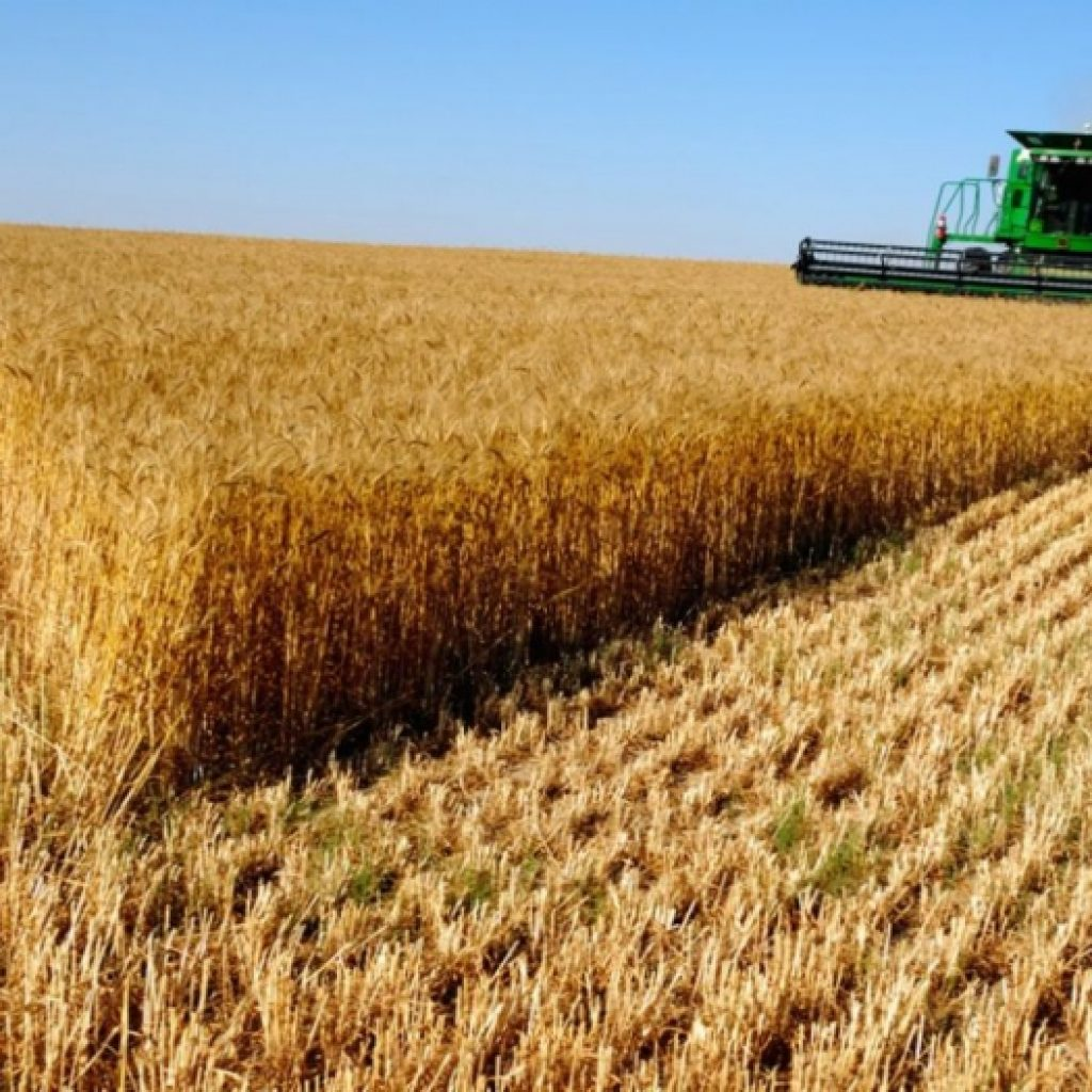уборка зерновых в жамбылской области