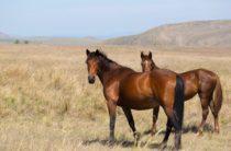 В Жамбылской области расследуют падеж скота