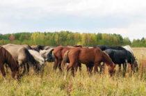 Мелкотоварность тормозит развитие животноводства — Берик Нигмашев