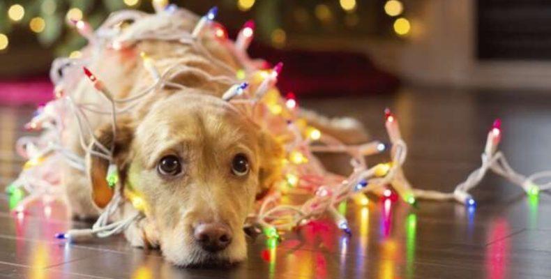 В ДЧС Жамбылской области рассказали, как надо встречать Новый год Золотой Собаки