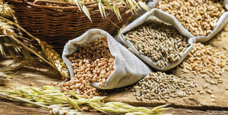 Теперь государство закупит у фермеров только «честную» пшеницу