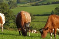 Открылись новые возможности для развития животноводства в регионе