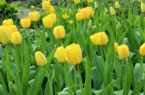 Каким будет апрель в Жамбылской области?