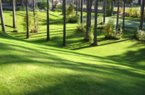 Работу по озеленению города предлагает акимат Тараза
