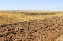 Необходимо с пользой использовать земли – эксперт