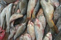 Торговые точки Тараза проверяют на предмет незаконной продажи рыбы