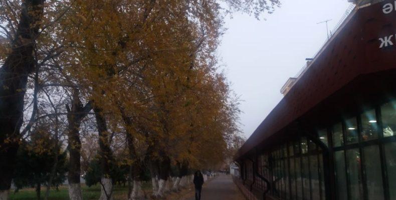 Дождь со снегом и заморозки пообещали жамбылцам