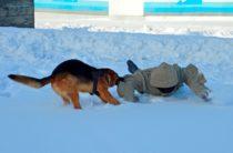 Раскрыть кражу помогла служебно-розыскная собака