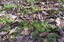 Весна идет! В Таразе пробилась первая весенняя травка