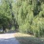 500 гектаров зеленых насаждений создадут «зеленый пояс» вокруг Тараза