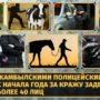 Квартирные воришки, карманники и барымтачи — с начала года в Жамбылской области задержано более 40 лиц