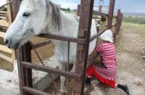 В Жамбылской области развивают личные подсобные хозяйства – пилотный проект