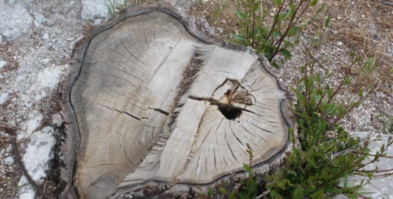 Вырубки деревьев: чем дышать будем, господа дровосеки?
