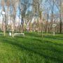 Благоустройством территорий к Наурыз мейрамы занялись в Жамбылской области