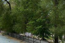 Уголовное дело возбудили в отношении предпринимателя, вырубившего деревья в Таразе