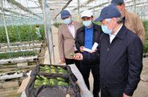 Бердибек Сапарбаев: заготавливать и перерабатывать местную сельхозпродукцию