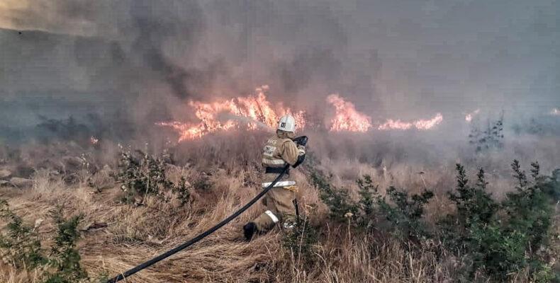 В Жамбылской области тоннами горит сено