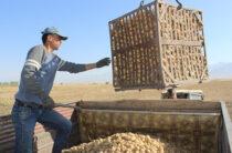 Бренды, которые принесут дивиденды: Жуалынский «второй хлеб»
