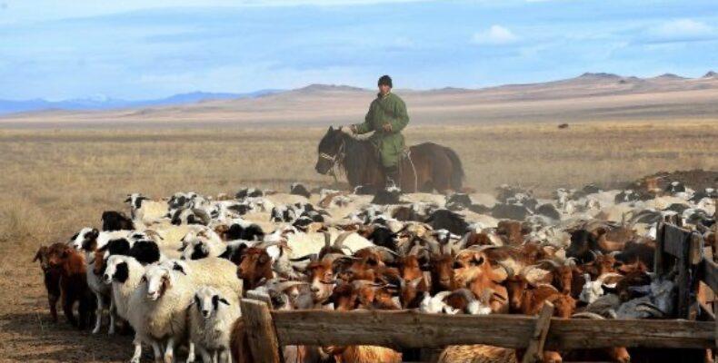 Украденных коз и овец вернули хозяевам жамбылские полицейские