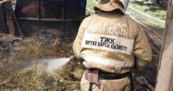 Пожары, коты, змеи — чем занимаются жамбылские спасатели