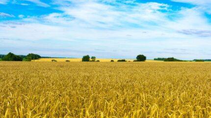 Необходимо вернуть неиспользуемые земли государству — Бердибек Сапарбаев