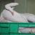 «АСА АГРО»: жамбылцев завалят куриным мясом