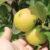 «ALTYN ALMA»: 50 гектаров фруктового рая