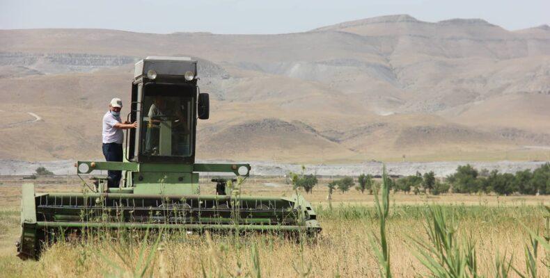 Цены на корма для сельхозживотных сдерживают в Жамбылской области