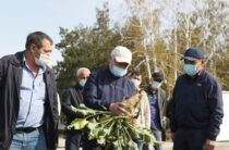 Объединиться в ассоциацию и построить свой сахарный мини-завод посоветовал свекловодам Бердибек Сапарбаев
