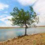 Как кордайские крестьяне решают проблему дефицита поливной воды