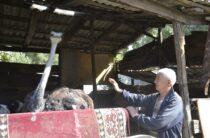 Африканских страусов выращивает жамбылский фермер