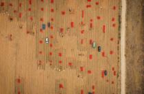 Жамбылские аграрии собрали более одного миллиона тонн лука