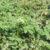В Жамбылской области продолжается уборка картофеля