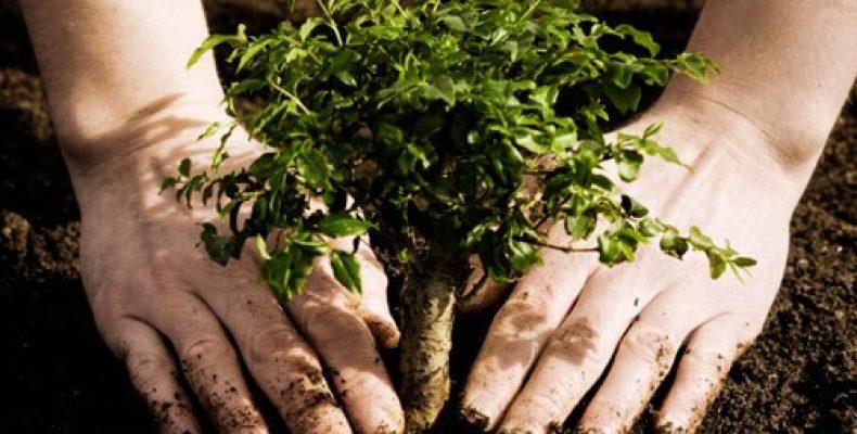 В Жамбылской области улучшают экологию