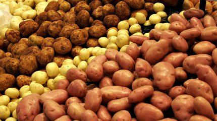 Партия зараженной импортной картошки уничтожена в Жамбылской области