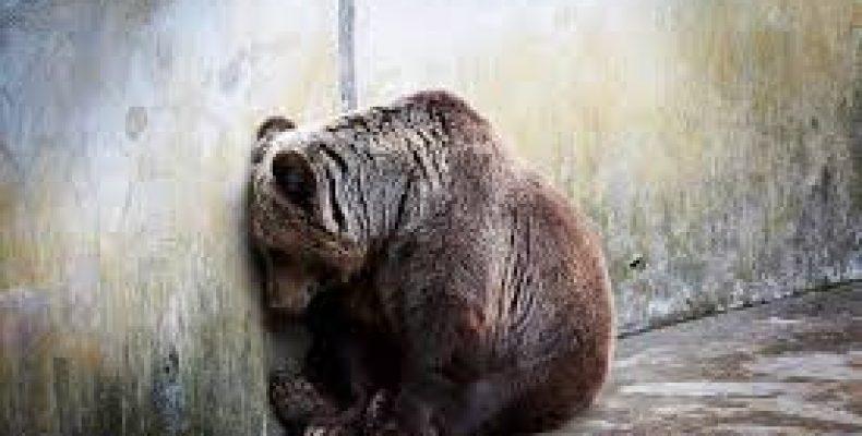 Акимат города Тараза отреагировал на жалобы горожан по поводу диких животных