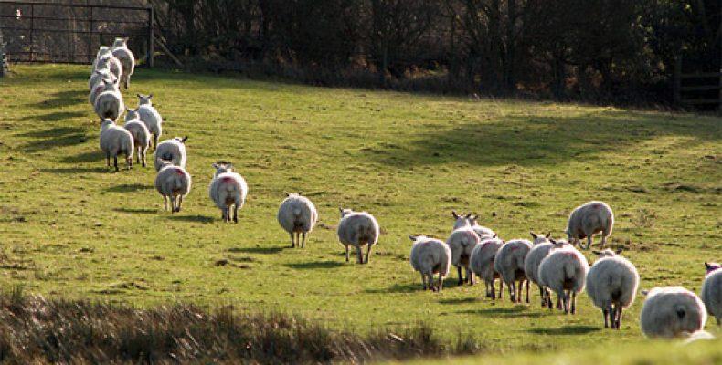 Скот в Жамбылской области крадут меньше