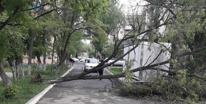 В Таразе ликвидируют последствия урагана