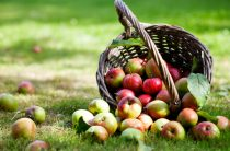 Масштабное развитие плодового производства прогнозируется на юге Казахстана