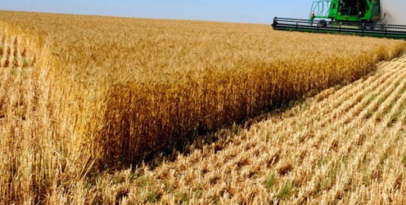 Отличный урожай зерновых культур получили в Жамбылской области