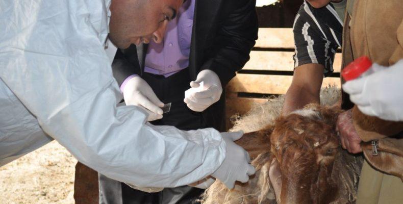 Вакцинация животных проводится формально и может привести к печальным последствиям
