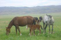 Животноводческое дело Сайрамбая Доненбаева — наследство от предков