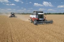 Жамбылцы намолотили зерна на уровне прошлого урожайного года