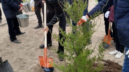 Аскар Мырзахметов посадил деревья в мойынкумской глубинке