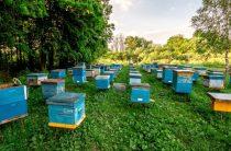 Экопасеки, популярные во всем мире, появились в Кордайском районе Жамбылской области